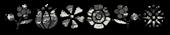 Font Kalocsai Flowers Grunge Logo Preview